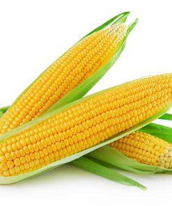 mazorca de maiz - Frutería de Valencia