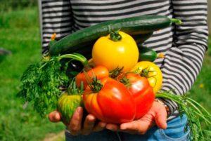 verdura de la huerta a tu casa