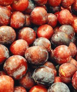 ciruelo fresa